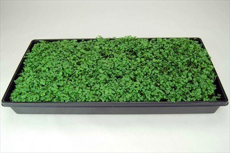galleon plant growing trays no drain holes x