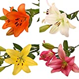 Farm Fresh Natural Assorted LA Hybrid Lilies - 40 Stems