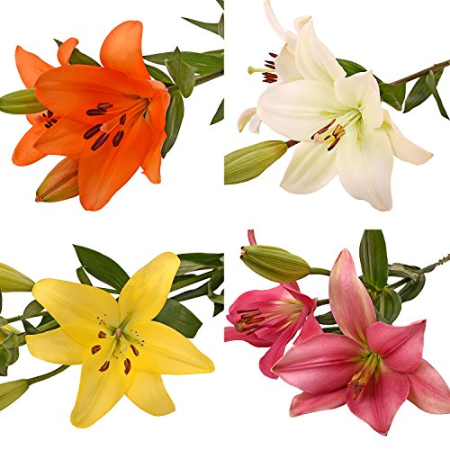 Farm Fresh Natural Assorted LA Hybrid Lilies - 40 Stems by Bloomingmore