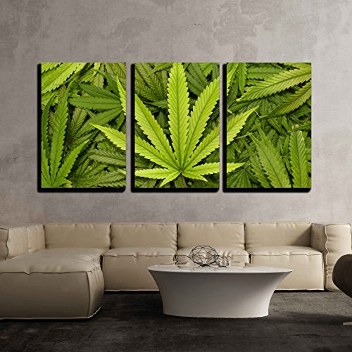 wall26 - 3 Piece Canvas Wall Art - Big Marijuana Leaf Close Up with Texture Background of Cannabis Leaves - Modern Home Decor Stretched and Framed Ready to Hang - 16