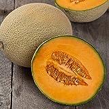 David's Garden Seeds Fruit Cantaloupe Hales Best EB113IO (Orange) 50 Organic Heirloom Seeds