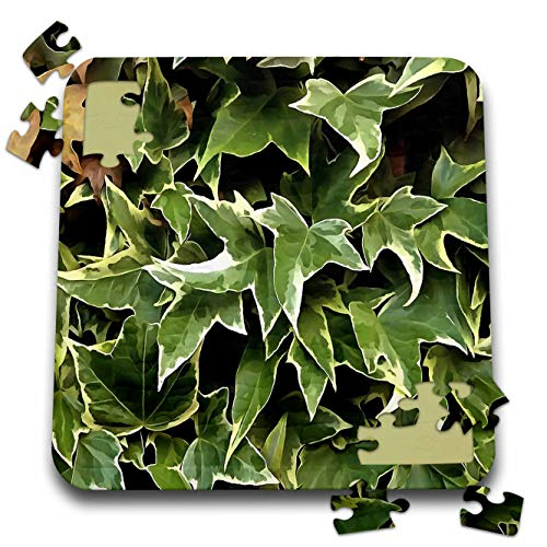 - 3dRose Taiche - Acrylic Painting - Ivy Leaves - Variegated Ivy - 10x10 Inch Puzzle (pzl_299380_2)