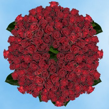 GlobalRose 250 Fresh Cut Dark Red Roses - Long Stem Roses - Fresh Flowers Wholesale Express Delivery