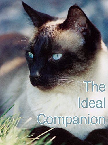 (The Ideal Companion)
