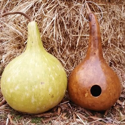 (Gourd Seeds - Birdhouse/Bottle - Packet, Vegetable Seeds)