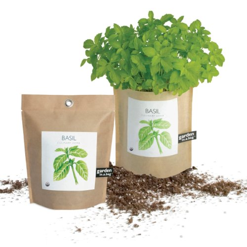 Potting Shed Creations Garden in a Bag - Basil by Potting Shed