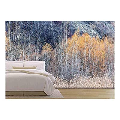 Background Nature Landscape of Bare Trees and Grasses in Winter Ravine, Professional Creation, Charming Piece