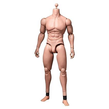Amazon.com: Hot Toys True Type Advanced Muscular Figure Body TTM-20 ...