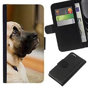 EJOY---La carpeta del tirón la caja de cuero de alta calidad de la PU Caso protector / Apple Iphone 5C / --Perro del gran danés de oro Animal Pet