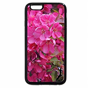 iPhone 6S / iPhone 6 Case (Black) Blossoms In Pink