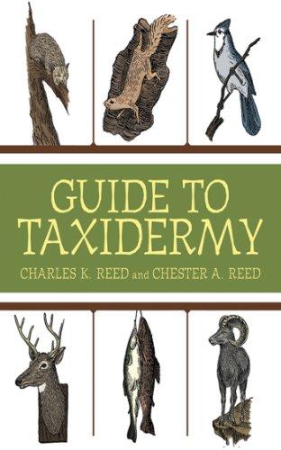 Guide to Taxidermy (Deer Twig)