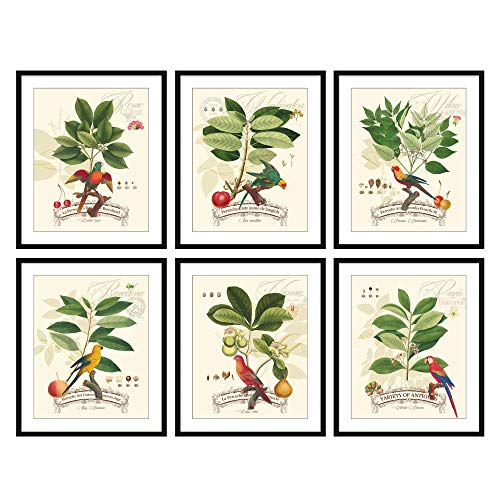 - Bestbuddy Pet Set of 6 (8X10) Unframed Antique Birds Botanical Print Set Beautiful Tropical Birds Flowers Plants Illustration Home Decor Wall Art N033