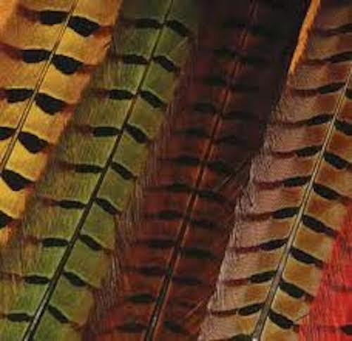 Hareline Ringneck Pheasant Tail Feathers (Fly Tying Wing)