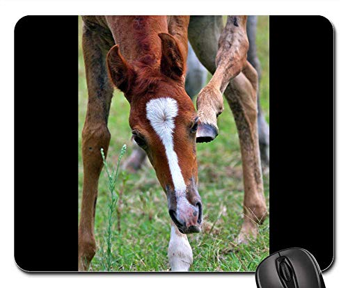 Mouse Pads - Foal Animal Arabian Arab Horses Equine Chestnut