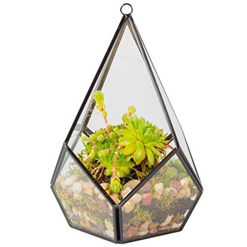 Glass Terrarium, Succulent & Air Plant (Tear Drop)
