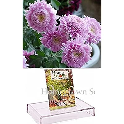 Homegrown Packet Chrysanthemum Seeds, 135 Seeds, Purple Chrysanthemum Mum : Garden & Outdoor
