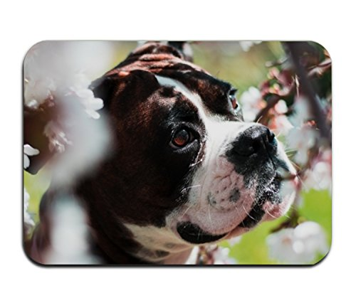 Boxer Door Mat - Fashion 3D Print Door Mat Boxer Dog Welcome Doormat for indoor outdoor