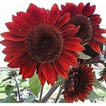 Heirloom 100 Seeds Helianthus Sunflower Jerusalem Artichoke Sunroot Red Flower Bulk Seeds B4073