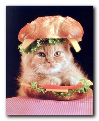 Cute Cat In A Sandwich Kitten Animal Wall Decor Art Print Poster  16X20