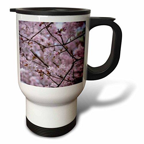 3dRose Alexis Photography - Flowers Sakura Beautiful - Pink Japanese cherry blossom sakura flowers on a blooming tree - 14oz Stainless Steel Travel Mug (tm_286580_1) by 3dRose