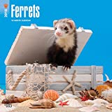 Ferrets 2018 12 x 12 Inch Monthly Square Wall Calendar, Domestic Furry Animals (Multilingual Edition)