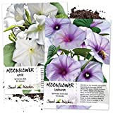 Seed Needs, Moonflower Seed Collection (2 Individual Packets) White & Lavender