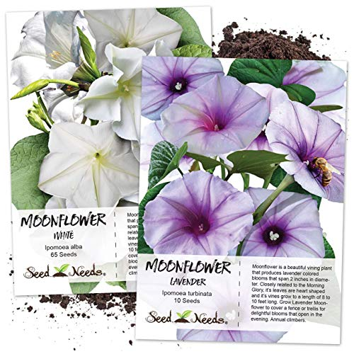 - Seed Needs, Moonflower Seed Collection (2 Individual Packets) White & Lavender