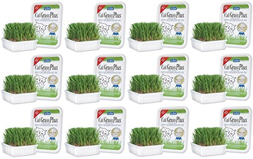 Tub 150g - Cat-About Multi-Cat CatGrass Plus Tub 150 grams (Pack of 12)