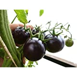 Organic Tomato 'Black Cherry' (Lycopersicon Esculentumm Mill.) Vegetable Plant Seeds, Indeterminate Heirloom