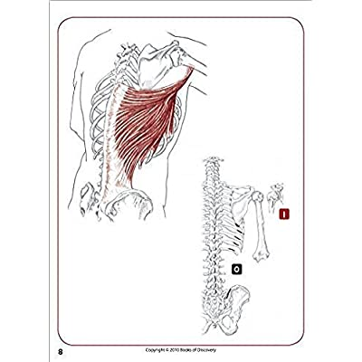 Trail Guide to the Body Flash Cards 5th Edition Volume 2 - Muscles of the Human Body: Toys & Games