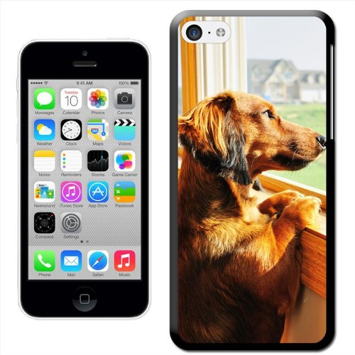 Fancy A Snuggle 'Dachshund Looking Out of sur cour Coque arrière rigide à clipser pour Apple iPhone 5C
