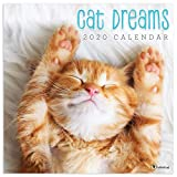 2020 Cat Dreams Wall Calendar