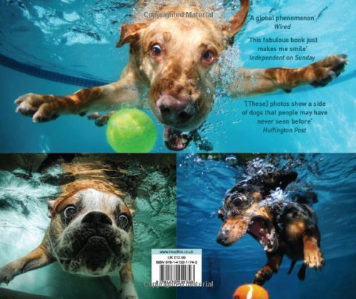 The 8 best photography underwater dogs