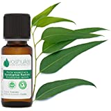 Huile Essentielle d'Eucalyptus Radiata - 20ml