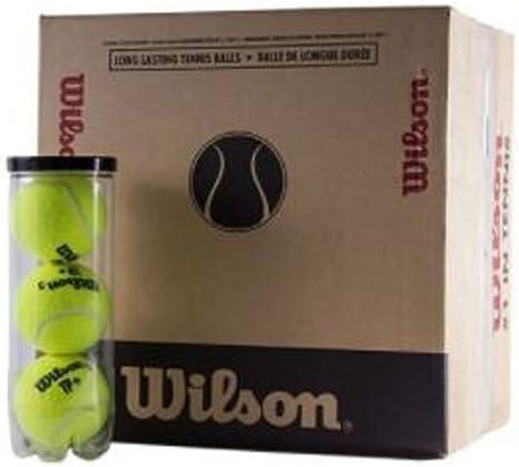 Wilson Pelotas de Tenis/Padel TP Plus Caja: Amazon.es: Deportes y ...