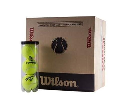 Wilson TP Plus Pelotas Tenis / Padel Caja 48 pelotas: Amazon ...