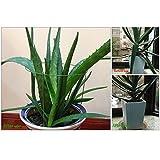 rescozy (Pack of 3) Garden Plant Support