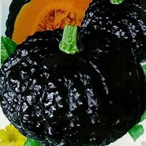10 Japanese Black Pumpkin - Kabocha Seeds - Open Pollinated, Heirloom !