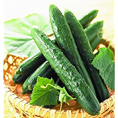 Cucumber Seeds Chinese Miracle Vegetable seeds late : Garden & Outdoor