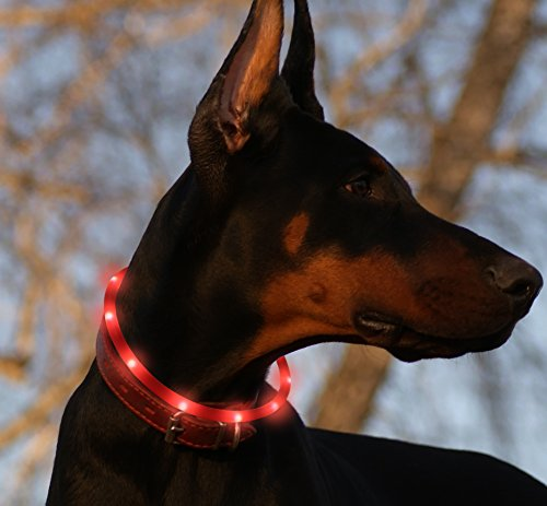 Led Dog Collar USB Rechargeable Glowing Pet Safety Collars Water Resistant Light up Improved Dog Visibility & Safety Adjustable Flashing Collar for Dogs 6 Stylish Colors by Bseen (Red) - Dog Collar Leash Tag