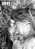 Kalender 2013 - Eichhörnchen: DIN A5, 1 Woche auf 2 Seiten + 2 Seiten Jahresübersicht + Ferienübersicht + Platz für Adressen und Notizen (German Edition)