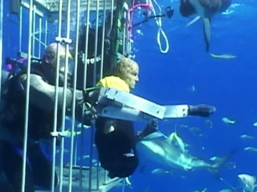 MythBusters Jawsome Shark Special ()
