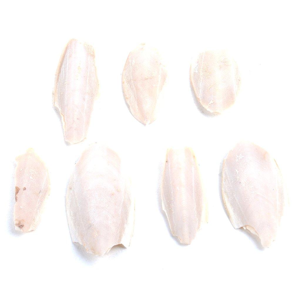 Hueso de Cuttlefish, WOOPOWER para peces y pájaros de Budgie para comida tortuga