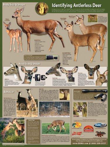 Selective Antlerless Deer Harvest Poster