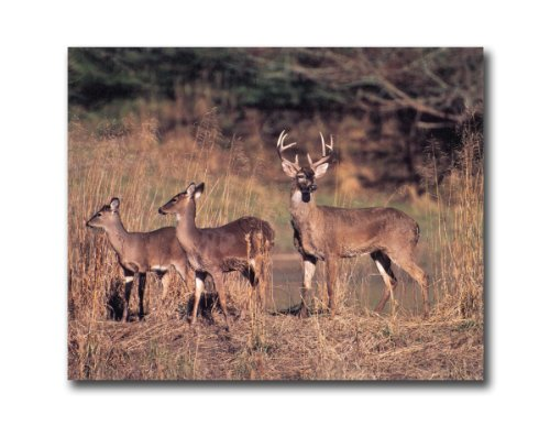 deer picture frame 8x10 - 4