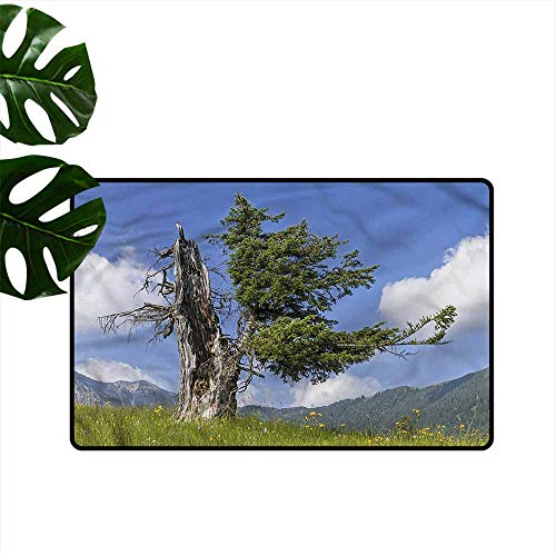 (Fashion Door mat Nature Old Spruce Tree in Meadow Personality W24 xL35)