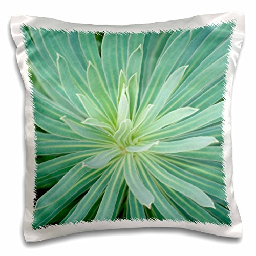 Danita Delimont - Flowers - WA, Bellevue Botanical Garden, Euphorbia flower - US48 RTI0281 - Rob Tilley - 16x16 inch Pillow Case - Wa Square Bellevue
