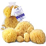 Natural Sea Sponges 5 pc Multi Pack the Perfect Spa Gift Set to Pamper Moms, Brides, Girlfriends, Teens; Gentle, Hypoallergenic, Great for Bath, Shower & Facial Cleansing by Constantia Beauty TM with BONUSES!
