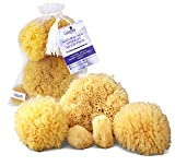 Real Natural Sea Sponges Multipack - 5pc Spa Gift Set, Gentle Hypoallergenic, Great for Bath Shower & Facial Cleansing, Eco Friendly, Pamper Moms Brides Girlfriends & Teens by Constantia Beauty