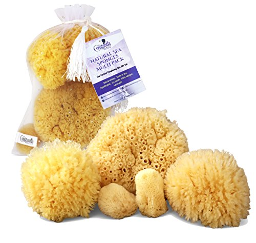 (Real Natural Sea Sponges Multipack - 5pc Spa Gift Set in Premium Bag, Kind on Skin, For Bath Shower Facial Cleansing, Eco Friendly, Pamper Moms Brides Girlfriends & Teens by Constantia Beauty)